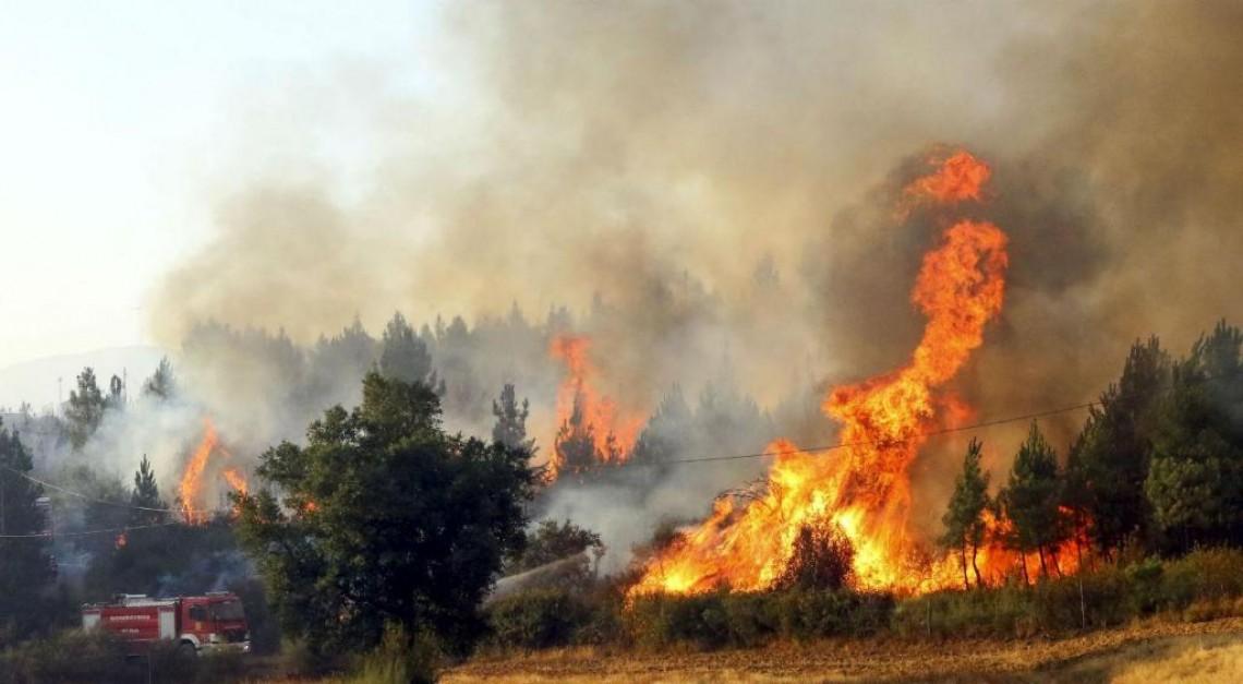 Prevenção de incêndios. Saiba quais as regras para proteger os terrenos