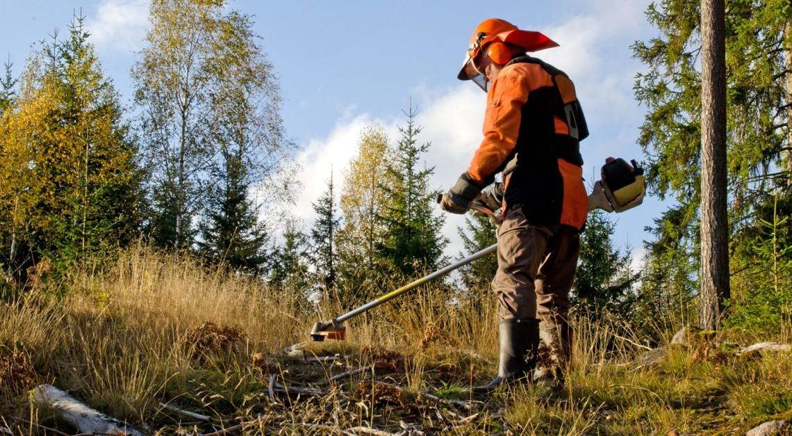 Limpeza obrigatória dos terrenos em espaços rurais. Prazo estendido até 15 de maio